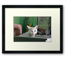 Ermmm, is there something in my teeth? Framed Print