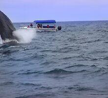 Humpback Whale Breaching Near Puerto Lopez, Ecuador V by Al Bourassa
