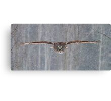 Coming in at full speed - Great Grey Owl Canvas Print