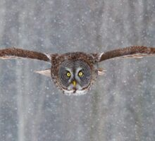 Coming in at full speed - Great Grey Owl Sticker