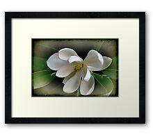 Sweet Bay Magnolia Framed Print