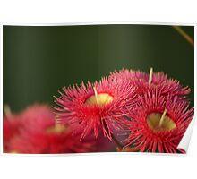 Gum Flower Poster