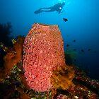 Diving a wreck by daveharasti