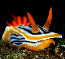 Undersea Jewels by daveharasti