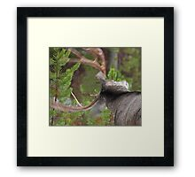 Shaking the Rain Off... featured on NPR Blog Framed Print