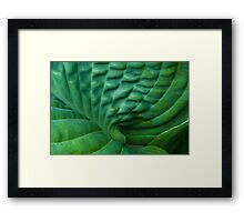 Frog's Lungs Framed Print