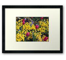 Tulips Framed Print