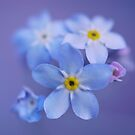Forget me not by Angelique Brunas