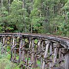 Belgrave Trestle Bridge by mspfoto