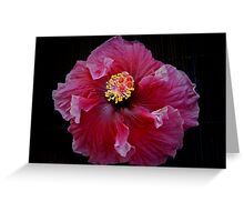 Red Ballerina Hibiscus Greeting Card