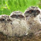 Triplets by stevealder