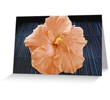 Apricot Lady Greeting Card