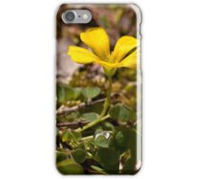 Yellow Wood Sorrel iPhone Case/Skin