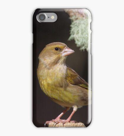 Greenfinch -  Carduelis chloris iPhone Case/Skin