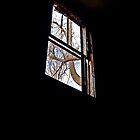 A Light In The Dark by Paul Lubaczewski