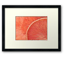 Marvelling the Mushroom Framed Print