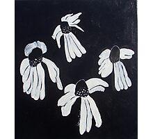 Monochrome Daisies Photographic Print