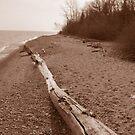 Beach by Tracy Wazny