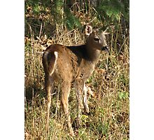 Button Buck Photographic Print