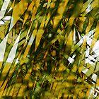 Windy Summer by Cesar Peralta Gaxiola
