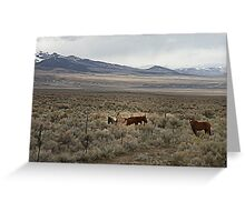 Roan & Paint Greeting Card
