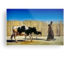 One Man Leading One and a Half Cows Metal Print