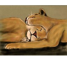 Big Cat Nap Photographic Print