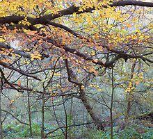Misty Autumn Wood by Roberto Herrett