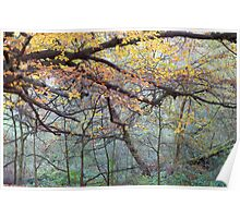 Misty Autumn Wood Poster