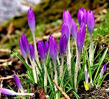 Promise Of Spring by Jo Nijenhuis