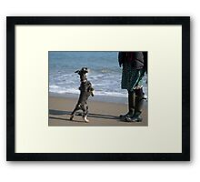 Dance Doggie Dance! Framed Print