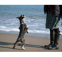 Dance Doggie Dance! Photographic Print