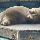 Pier 39 Seals by empyrean114