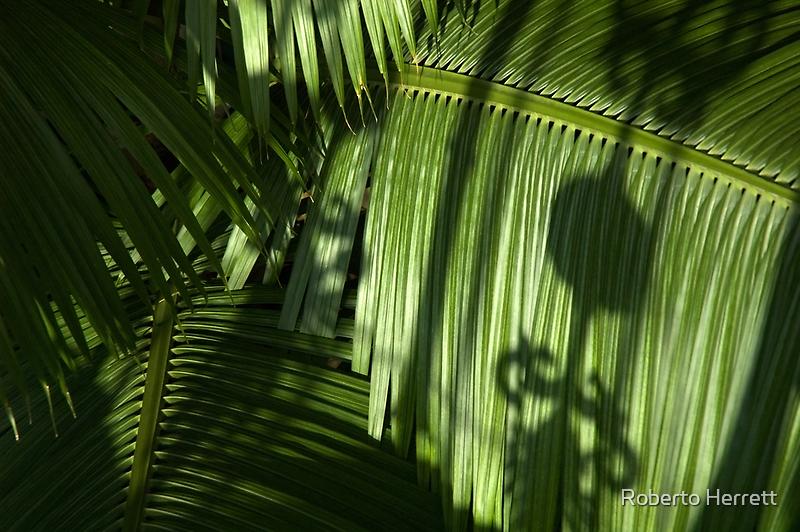 Kew Gardens Palm House by Roberto Herrett