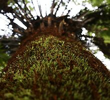 Cool Tempered Rainforest, Victoria  by mapartstudio