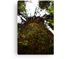 Cool Tempered Rainforest, Victoria  Canvas Print