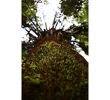 Cool Tempered Rainforest, Victoria  Photographic Print