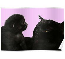 big kitty little kitty Poster