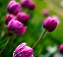 Tulip Garden by Nicolas Raymond