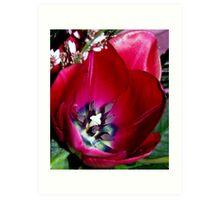 a fabulous tulip Art Print