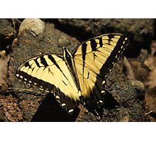 Butterfly the Vamp Slayer Photographic Print