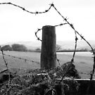 barb wire by paula cattermole artinapuddle