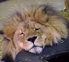Daddy Lion by Jessica Ryden