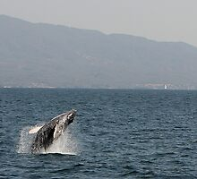 Whale Out of Water by Swede