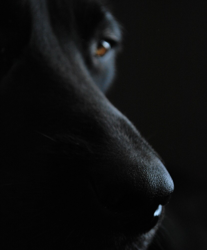 Up Close and Personal by Johanne Brunet