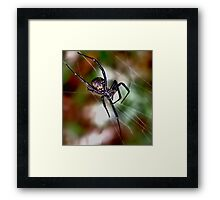 I 'm Watching You  ( Black Widow series) Framed Print