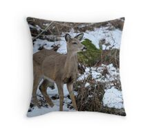 Young White-tailed deer Throw Pillow