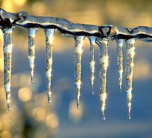 Ice on a Wire by Lee Donavon Hardy