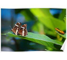 Butterflies on a leaf B Poster