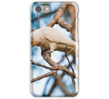 Corella  iPhone Case/Skin
